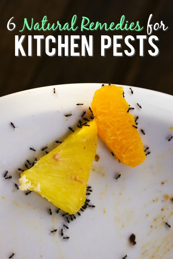 6 Natural Remedies for Kitchen Pests - If kitchen pests are invading your home and driving you nuts, try these 6 simple and natural remedies for kitchen pests to get rid them quickly! Cleaning | Kitchen Tips