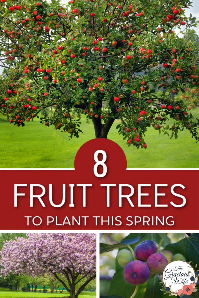 """Collage with apple tree on top, cherry tree in bloom on bottom left, and figs on a tree on bottom right, with the words """"8 Fruit trees to plant this spring"""" in the center"""