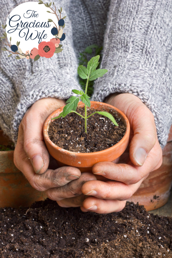 Two hands holding a clay pot with a sprout growing.